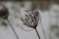 Butterfly-Junction-Feb-2009-seedhead