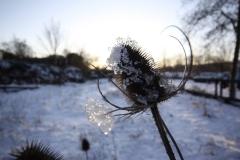 Butterfly-Junction-Jan-2010-3