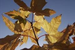 Butterfly-Junction-Nov-2008-6