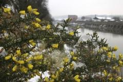 Snow-on-the-Cut-Feb-2009-1